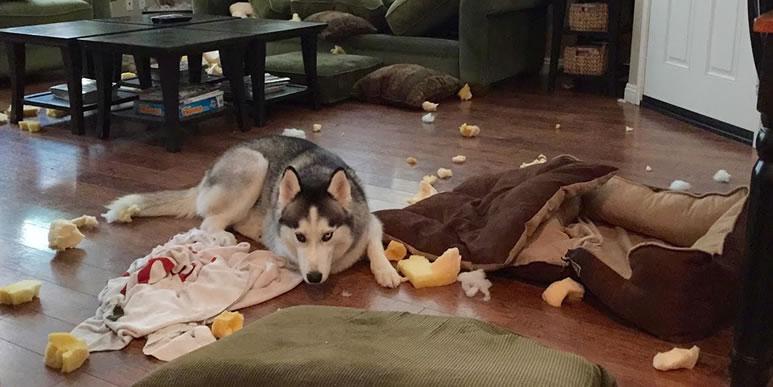 Собака воет, лает и разносит квартиру? Это отлично!