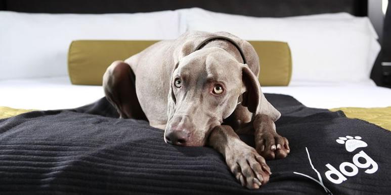 Везде как дома: специальный коврик поможет собаке справиться со стрессом