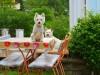Как сделать дачный участок комфортным для собаки