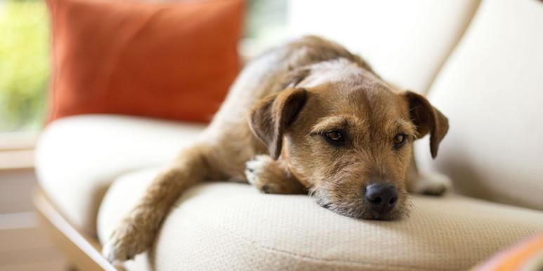 С раннего возраста приучайте щенка к одиночеству!