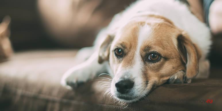 Любовь, стыд, страх. Какие эмоции способны переживать собаки?