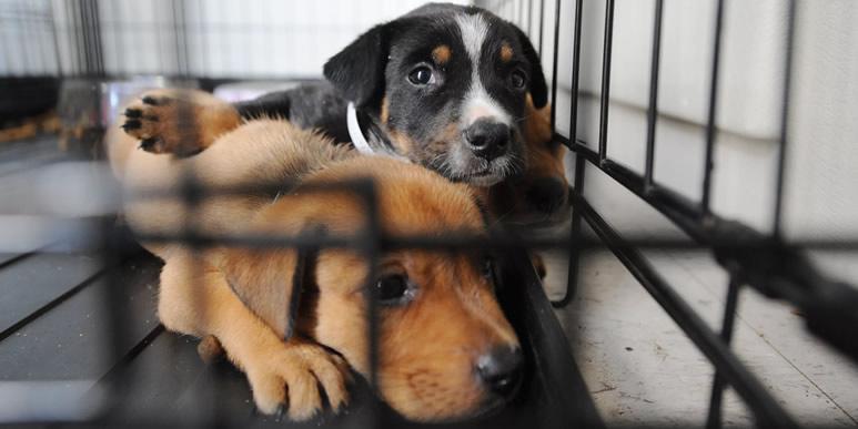 Эффективны ли занятия с собаками, живущими в приюте?