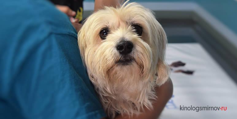 Переживают ли собаки из-за смерти близких друзей?
