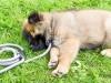 Почему собаки «бегают» во сне?