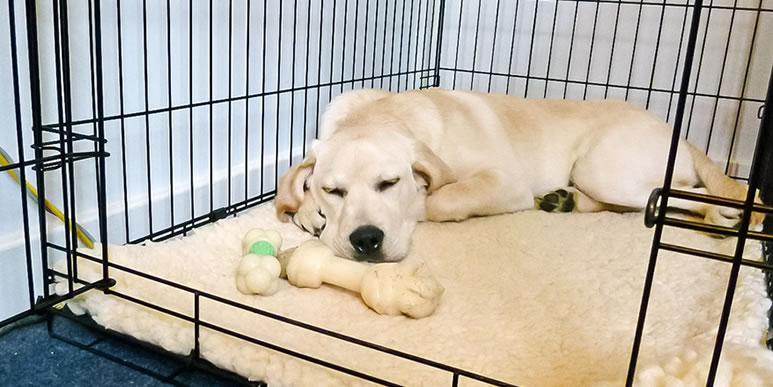 Как помочь собаке пережить переезд и избавиться от бессонницы?