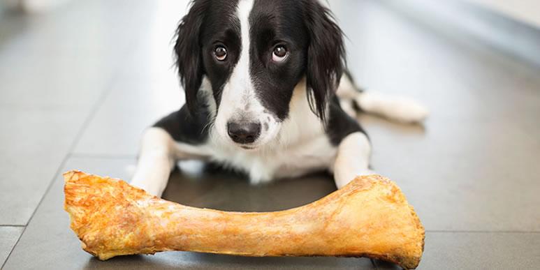 Безопасны ли «натуральные» собачьи лакомства из зоомагазина?