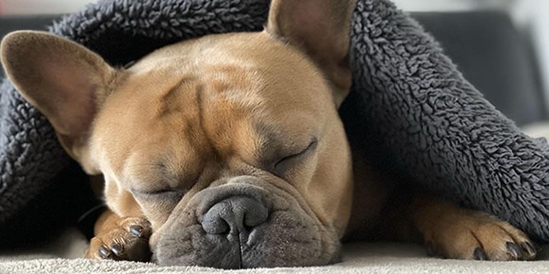 Почему собаки храпят?