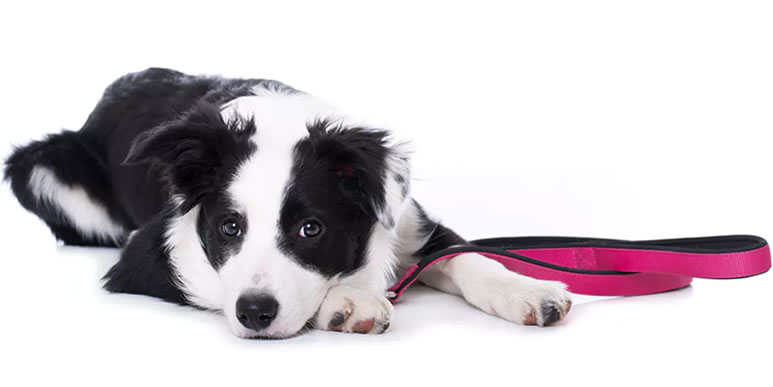 Поправки в закон, касающиеся выгула собак в Санкт-Петербурге
