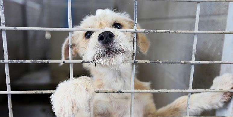 В Санкт-Петербурге разрабатывают новый закон о содержании собак