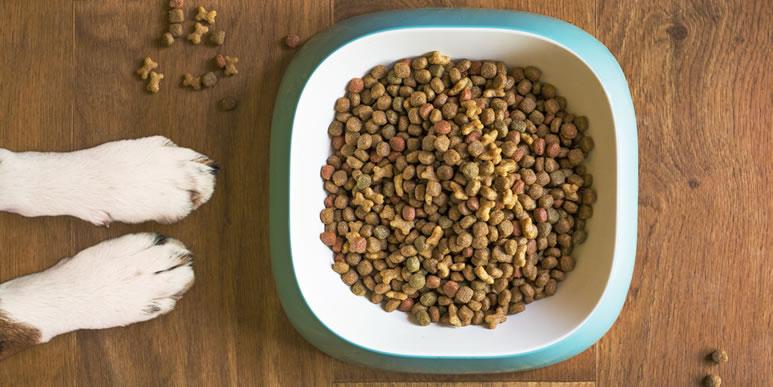 «Лечатся все одинаково»: мнение диетолога о «породных» кормах для собак