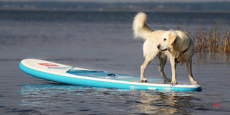 «Собачий спорт» или восемь способов классно провести время с лучшим другом