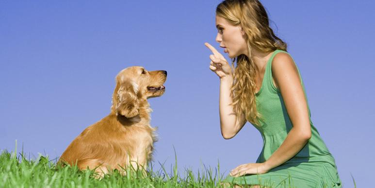 Искусство общения: несколько мыслей о том, как говорить с собакой
