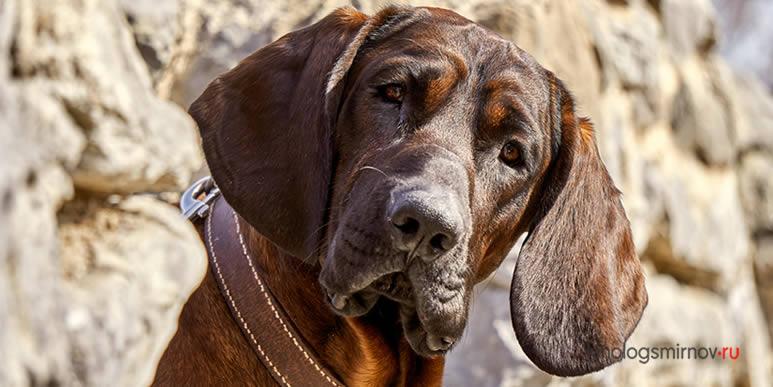 Насколько хорошо вы понимаете собачий язык?