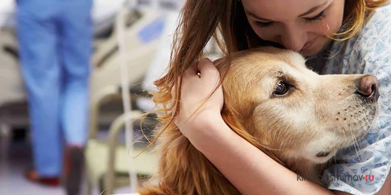 Использование собак в качестве терапевтов- жестокость по отношению к животным?