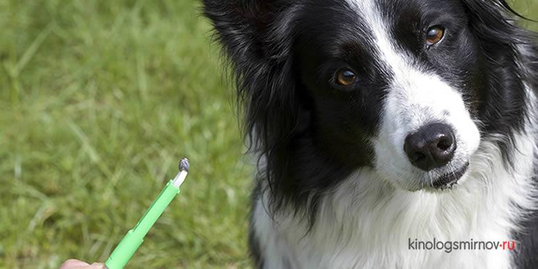Три самых популярных средства защиты собаки от укусов клещей