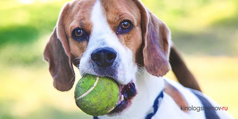 Три игрушки для собаки, на которые стоит потратить деньги
