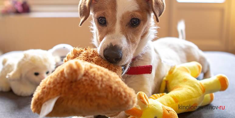 Восемь идей, как сэкономить на игрушках для щенка, не проиграв в качестве