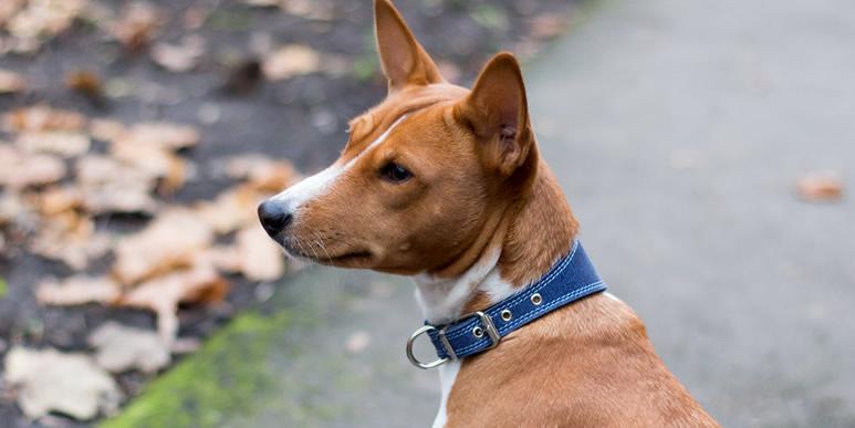То ли мы понимаем собачий язык, то ли собаки знают наш