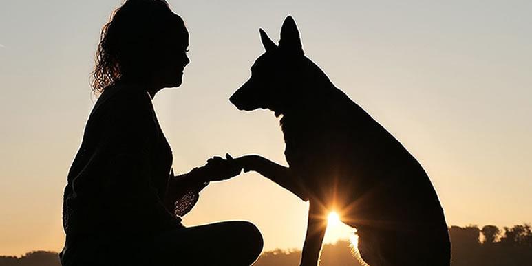 Неизвестные близкие друзья: 25 фактов о собаках, которые вы скорее всего не знали