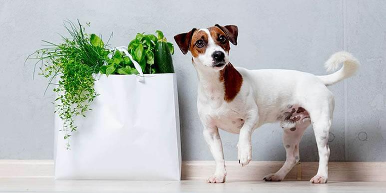 Дилемма вегетарианцев: есть ли будущее у кормов, не содержащих животного белка