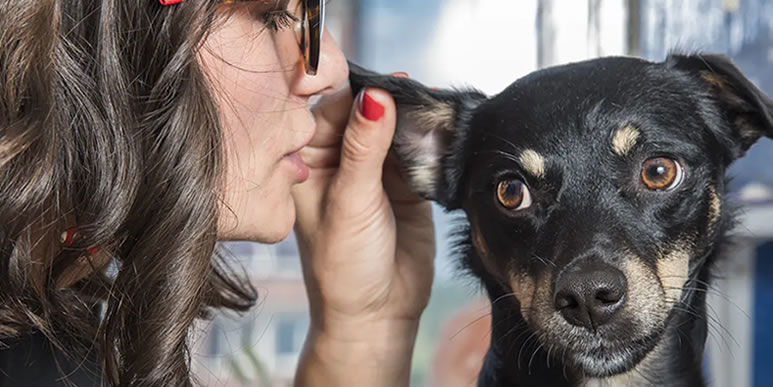Собаки узнают людей по голосу и различают слова