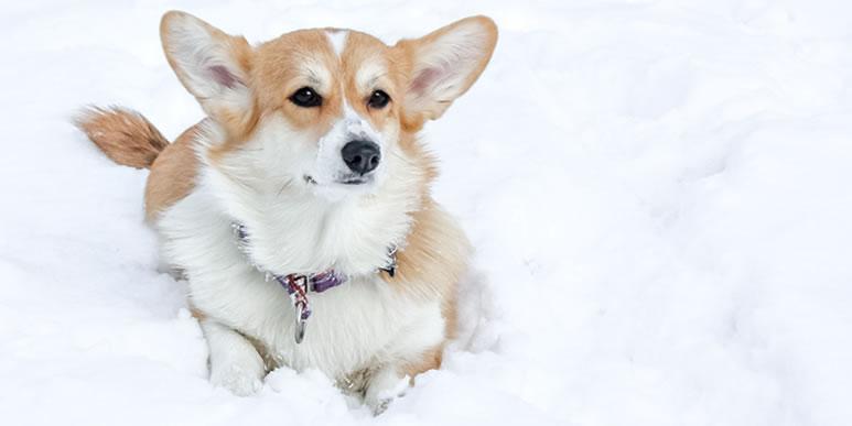 Почему собака боится гулять одна, но с появлением второй собаки ведет себя увереннее?