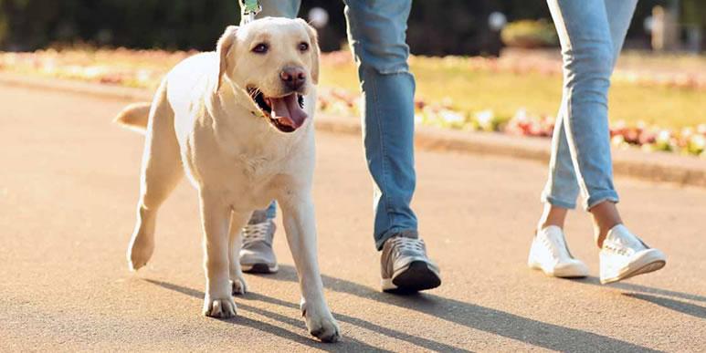 Две, три или больше: сколько прогулок в день нужно собаке?