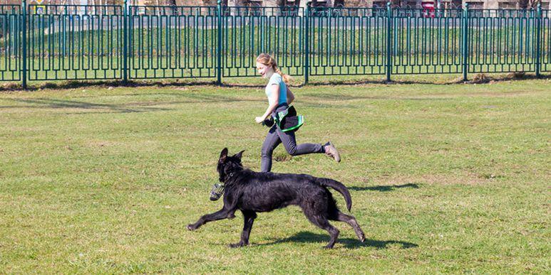 Почему собака в начале прогулки бегает с громким лаем?